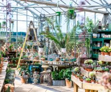 Houseplants inside a large greenhouse on tables and a ladder.