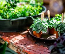 Miniature potted plants on a flaking wooden shelf inside the glasshouse.