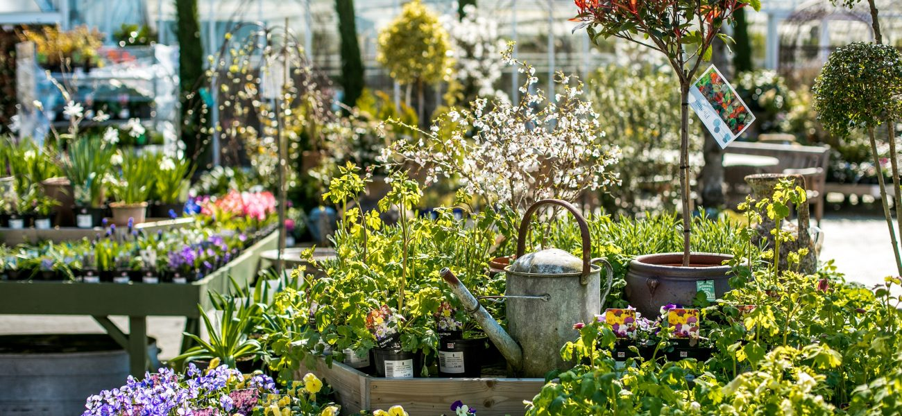 Potted spring flowers and watering can on display at the Duchy of Cornwall Nursery.