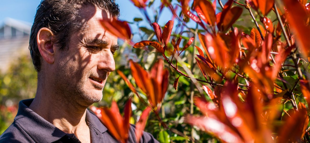 Rob Crowle, the Duchy Nursery's longest-standing staff member, tending to red flowers.