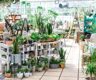 Bright indoor area with a collection of indoor plants at the Duchy nursery.