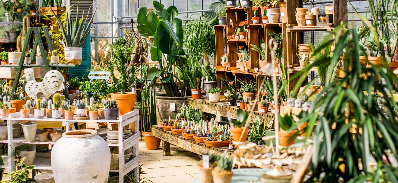 Terracotta plant pots with houseplants in a glass house.